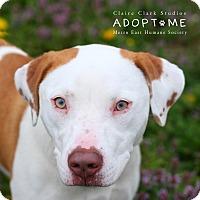 Adopt A Pet :: Athena - Edwardsville, IL