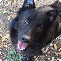 Adopt A Pet :: Frisbee - Boerne, TX