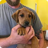 Adopt A Pet :: HANK - Albuquerque, NM