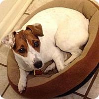 Adopt A Pet :: Misty in Houston - Houston, TX