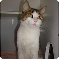 Adopt A Pet :: Niki - Lake Charles, LA