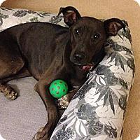 Adopt A Pet :: Eva - Santa Monica, CA