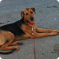 Adopt A Pet :: Shady - Rigaud, QC