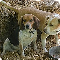 Adopt A Pet :: Mudflap - Indianapolis, IN