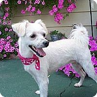 Adopt A Pet :: Mitzi - Fremont, CA