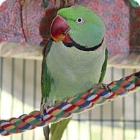 Adopt A Pet :: Skittles - Burleson, TX