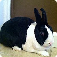 Adopt A Pet :: Flora - Los Angeles, CA