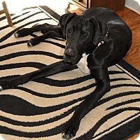 Adopt A Pet :: Gunner - Stevens Point, WI