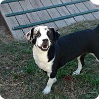 Adopt A Pet :: Sadie - Gainesville, FL