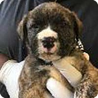 Adopt A Pet :: Willow's Kade - Chantilly, VA