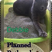 Adopt A Pet :: Debbie - Toledo, OH