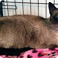 Adopt A Pet :: Ella - Jefferson, NC