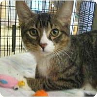 Adopt A Pet :: Mark - Deerfield Beach, FL