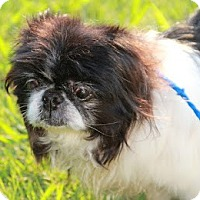 Adopt A Pet :: Gracious - Richmond, VA