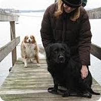 Adopt A Pet :: Kieffer - Lewisville, IN