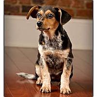 Adopt A Pet :: Jethro - Owensboro, KY