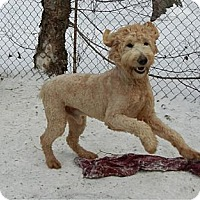 Adopt A Pet :: Taylor - ADOPTED!! - Antioch, IL