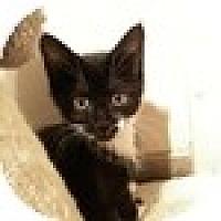 Adopt A Pet :: Mackenzie - Vancouver, BC