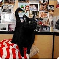 Adopt A Pet :: Binky - Farmingdale, NY