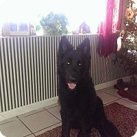 Adopt A Pet :: Atticus - Pompano Beach, FL