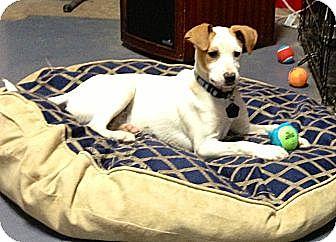 Terrier (Unknown Type, Medium) Mix Dog for adoption in Byhalia, Mississippi - Ginger