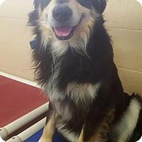 Adopt A Pet :: Otis - Yreka, CA