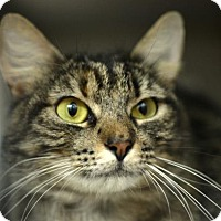 Adopt A Pet :: Katiness - New Orleans, LA
