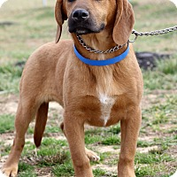 Adopt A Pet :: Wendell ADOPTION PENDING - Waldorf, MD