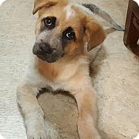 Adopt A Pet :: Tim (has a sponsor) - Burlington, VT
