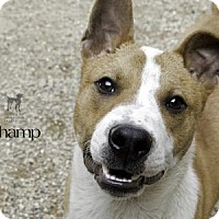 Adopt A Pet :: Champ - South Bend, IN
