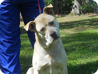 Husky/German Shepherd Dog Mix Puppy for adoption in Conyers, Georgia - Rocky
