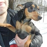 Adopt A Pet :: Millie ADOPTED!! - Antioch, IL