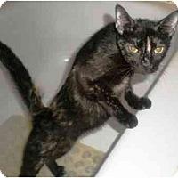 Adopt A Pet :: Koey - Summerville, SC