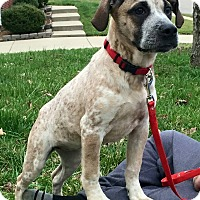 Adopt A Pet :: Bella - Mount Juliet, TN