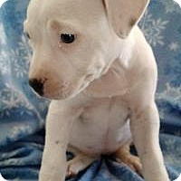 Adopt A Pet :: Prim - Marlton, NJ