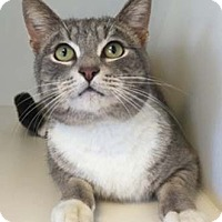 Adopt A Pet :: Scarborough - Merrifield, VA