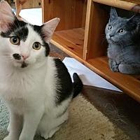 Adopt A Pet :: Paddy - Philadelphia, PA