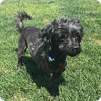 Adopt A Pet :: Trooper - Baltimore, MD
