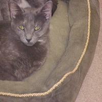 Adopt A Pet :: Tinker - Muscatine, IA
