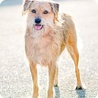 Adopt A Pet :: Kit Kat - Homestead, FL