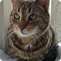 Adopt A Pet :: Stingy - Freeport, NY