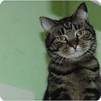 Adopt A Pet :: Bruiser - Lunenburg, MA