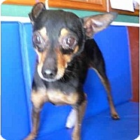 Adopt A Pet :: Mannie - Albuquerque, NM