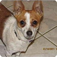 Adopt A Pet :: Abby in Houston - Houston, TX