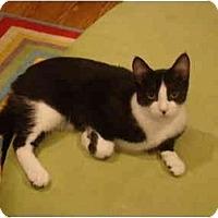 Adopt A Pet :: Checkers-PETSMART - Muncie, IN