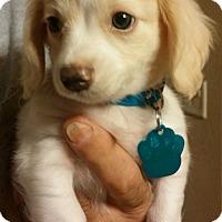 Adopt A Pet :: Parker - Golden Valley, AZ
