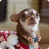 Adopt A Pet :: Java - Vacaville, CA