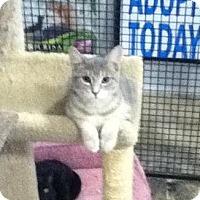 Adopt A Pet :: Dudley - Hamilton, ON