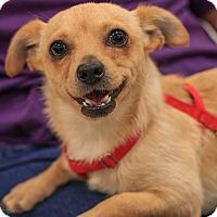 Adopt A Pet :: Austin - Seattle, WA