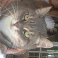 Adopt A Pet :: Gwen - Naples, FL